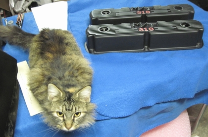 Our Maine Coon Bigfoot showing off Steve's M/T valve covers